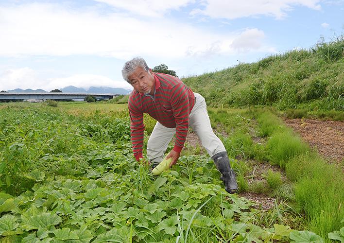桂瓜を収穫する石割さん