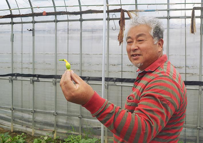 伝統野菜以外にも、ホテルからの依頼で栽培している極小カボチャ