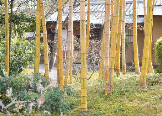 松花堂の金明竹
