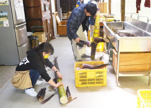 石田ファームのメンマ作り