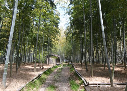 石田ファームの竹林