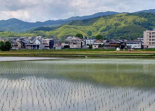 乙訓の田園風景